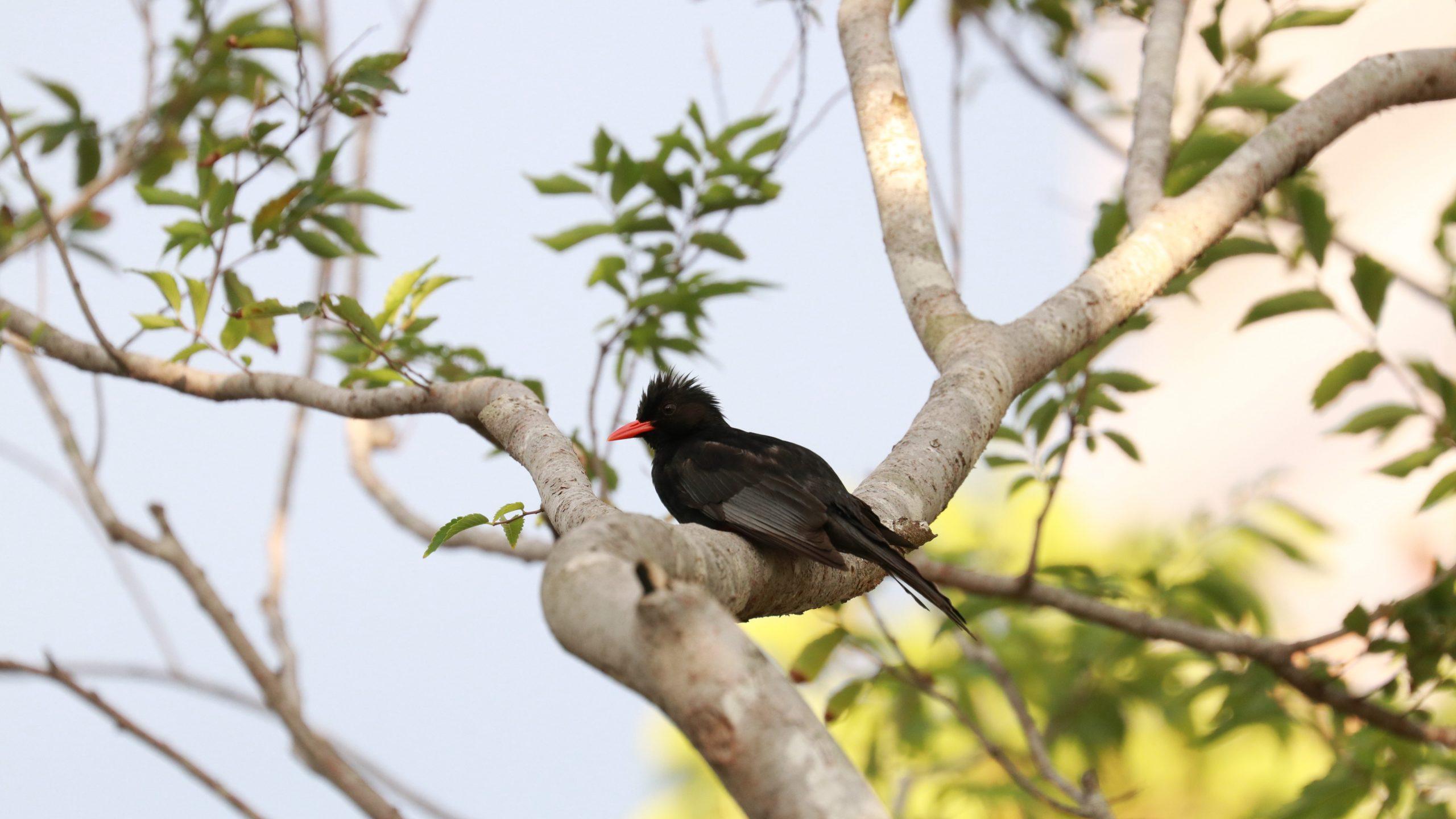 【自然筆記】觀察都市公園四季的喧鬧 和鳥兒做朋友